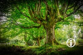 Ronin: Otzarreta Forest I