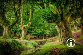 Ronin: Otzarreta Forest II
